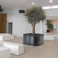 """Le bac à arbre """" Indoor """" - Image'In: Jardin d'hiver de style  par ATELIER SO GREEN"""