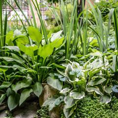 Un romantico giardino d'inverno: Giardino d'inverno in stile  di Ginkgo Giardini