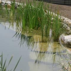Biotop: landhausstil Pool von Architektur und Geomantie