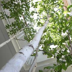 Jardines de estilo  por よしだみわこ建築設計事務所, Escandinavo