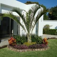 Garden by Vivero Sofia, Tropical