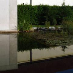 Waterhouse:  Pool von Architekt Zoran Bodrozic