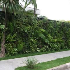 Fachada - Painel verde: Jardins tropicais por HZ Paisagismo