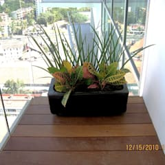 MACETA CON PLANTAS EN BALCON: Jardines de estilo topical por Tropico Jardineria