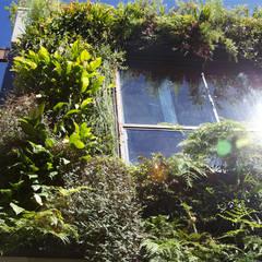 Jardim Vertical : Paredes  por Ecoeficientes