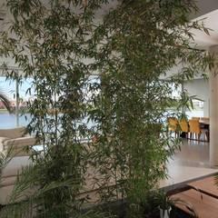 Casa del Cabo: Jardines de invierno de estilo  por Remy Arquitectos