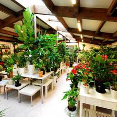 ゆくはし 植物園: 一級建築士事務所  馬場建築設計事務所が手掛けたオフィススペース&店です。