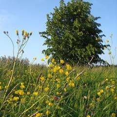 Jardines de estilo rural de groenpartners Rural