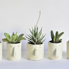 Pompilio Plants OgródRośliny i kwiaty