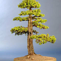 Jardines de estilo  por Bonsai-Shopping