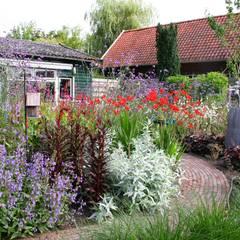 Kleurrijke achtertuin:  Tuin door Carla Wilhelm,