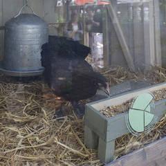 Les poules: Centre d'expositions de style  par Fertiles