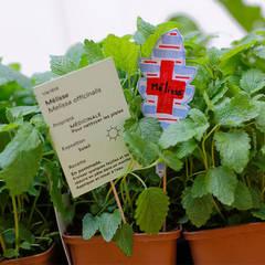 Plantes médicinales : Lieux d'événements de style  par Fertiles