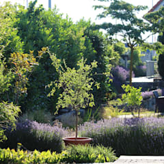 Garten:  Garten von Massive Wohnbau GmbH und Co. KG