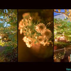 Natuurlijke stadstuin: scandinavische Tuin door Van Mierlo Tuinen | Exclusieve Tuinontwerpen