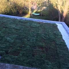 Toitures végétalisées : Murs de style  par  JADE Espaces Verts