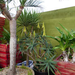 HAMP Dahlia HGC: 家谷植景研究所が手掛けたオフィススペース&店です。