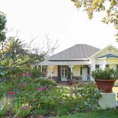 Soft Planting around a Rondebosch Victorian Villa:  Garden by Red Daffodil