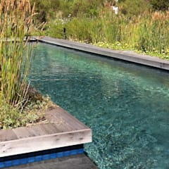 Lap Pool set in fynbos:  Pool by Red Daffodil