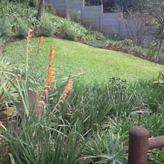 AN INDIGENOUS KLOOF GARDEN:  Garden by Paul's Plantscapes