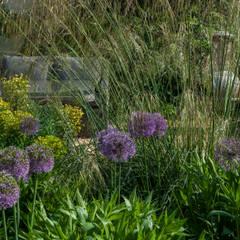 Rundle House:  Garden by Aralia