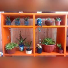 Estante con diferentes variedades de plantas suculentas: Salas de estilo ecléctico por Conexion Interior, Arquitectura y Diseño