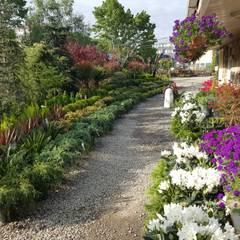 abelia peyzaj – abelia 2016:  tarz Bahçe, Modern