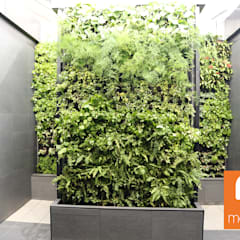 Virgin Active - Menlyn Maine:  Commercial Spaces by Modiwall Vertical Gardens,