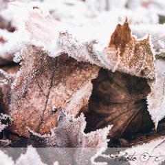 Laub im Winter:  Garten von GARDOMAT - Die Gartenideenmacher
