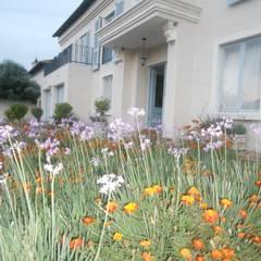 Jardines de estilo  por SOJE Interior, Design and Decor PTY (Ltd), Mediterráneo