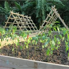 瓜棚架也能變的不一樣喔!:  庭院 by 霖森園藝