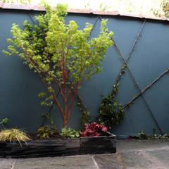 Érable japonnais : Jardin de style de style Asiatique par Constans Paysage