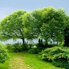 Густой лес: Сады в . Автор – Укр Ландшафт Парк
