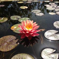 PISCINAS CONVENCIONALES RECONVERTIDAS A PISCINAS NATURALES: Piscinas de estilo  de jardinista