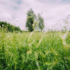 Vegetatie: landelijke Tuin door Buro Buitenom exterieurontwerpers