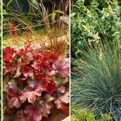 palette végétale: Jardin de style de style Tropical par Constans Paysage