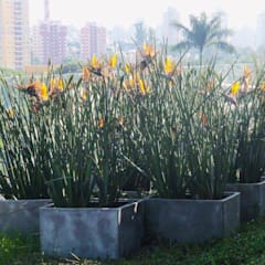 Estanques de jardín de estilo  por Verdeperto Paisagismo, Rural Concreto