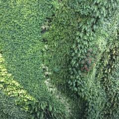 muro vivo Pennsylvania Suites CDMX: Jardines en la fachada de estilo  por Verde360°