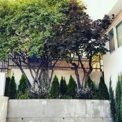 Jardines de estilo moderno de 보테니크 Moderno