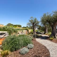Casa Raio de Luz: Jardins modernos por Jardíssimo