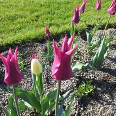 Staudenpflanzung lila:  Veranstaltungsorte von Bender Freiraumplanung