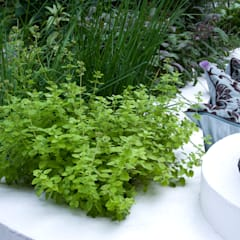 Herb bed:  Garden by Earth Designs