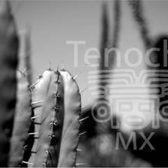 Terrario Ancestral : Jardines de piedra de estilo  por terranova Proyectos de Jardinería y Limpieza