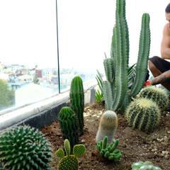 Terraqua Design – Los Altos İstanbul Kaktüs Bahçesi:  tarz Kayalı bahçe