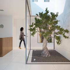 Casa Aline Jardines de invierno de estilo moderno de SINGULAR STUDIO Moderno Vidrio