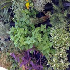 Detalle. Jardin Vertical con Substrato.: Jardines delanteros de estilo  de GreenerLand. Arquitectura Paisajista y Tematización
