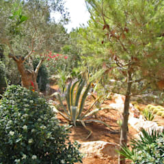 Villengärten auf Mallorca:  Garten von guba + sgard Landschaftsarchitekten