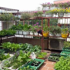 Chủ nhà đã sử dụng sân thượng làm vườn rau nhỏ cho gia đình.:  Hiên, sân thượng by Công ty TNHH Thiết Kế Xây Dựng Song Phát