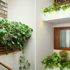 Bồn cây trước cửa sổ, khu giếng trời cũng trồng nhiều cây phù hợp với điều kiện ánh sáng.:  Giếng trời by Công ty TNHH Thiết Kế Xây Dựng Song Phát