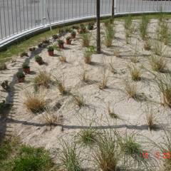 Escola Vila do Conde: Jardins  por Viveiros da Boa Nova, Lda